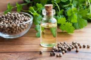 coriander essential oil