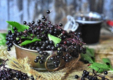 Black Elderberry an Immune Boosting herbs